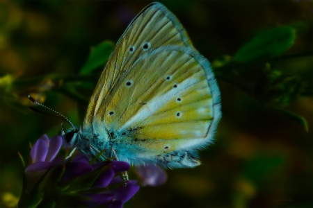 night and color - color, beautiful, nature, buterfly, buterflies