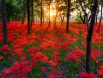 sunset_forest_flowers