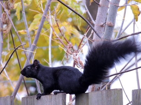 Pure Trouble ! - Animal, Squirrel, Photography, Autumn