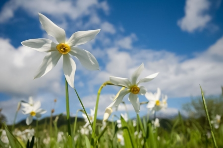 Spring - flower, nature, white, sping