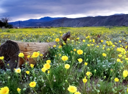 When the field blooms - flowers, yellow, nature, When the field blooms, field