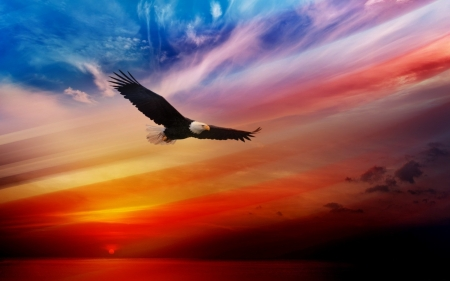 Eagle in the SKy - flying, colored, high, eagle, rainbow, bald, sky