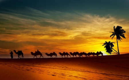 sunset in the desert - journey, desert, Palm tree, camels, sunset, Bedouins