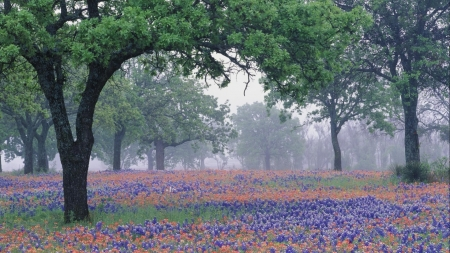 Foggy Landscape of Texas Wildflowers - Texas, Landscape, Trees, Spring, Flowers, Fog, Nature