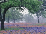 Foggy Landscape of Texas Wildflowers