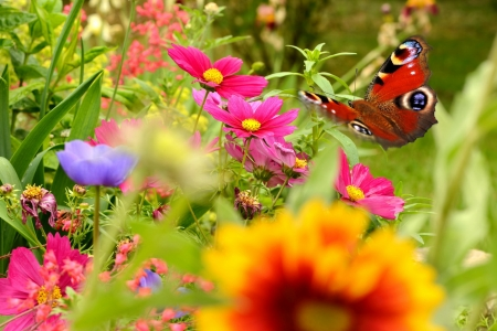 Spring paradise - colorful, paradise, butterfly, garden, spring, scent, fragrance, freshness, beautiful