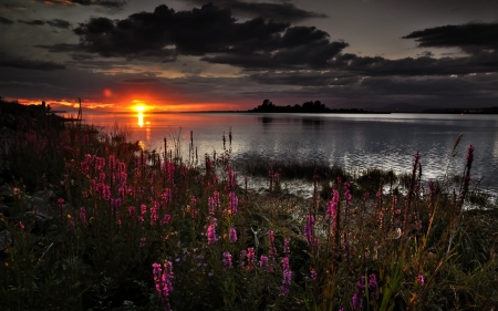 Spring Sunset - 4K, flowers, sunset, lake
