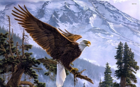 American Bald Eagle - mountain, tree, eale, snow, alaska, american, bald, top