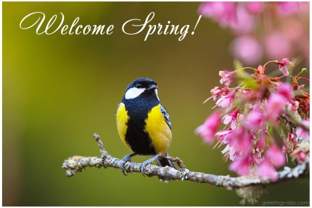 Welcome Spring - time, greetings, welcome, back, ground, spring