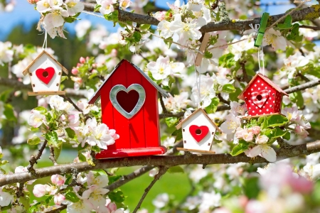 Spring birdhouses - scent, spring, flowering, beautiful, fragrance, blooms, freshness, pretty, tree, birdhouse