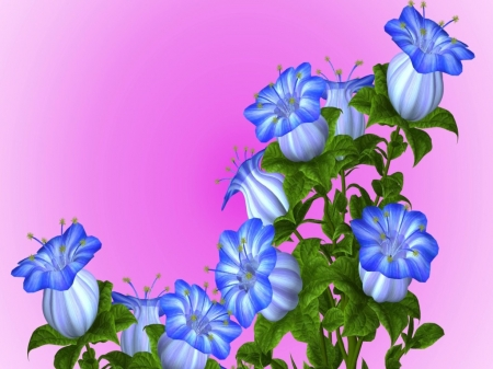 Rare Flowers On Gradient - design, flowers, pink, blue