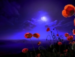 Moon Kissed Poppies