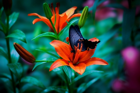 Butterfly on flower - scent, butterfly, flower, garden, beautiful, spring