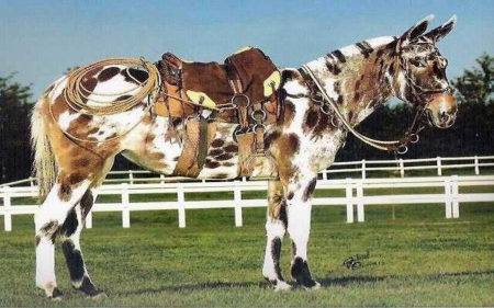 Rare Colored Horses - Rare, Fence, Horses, Colored