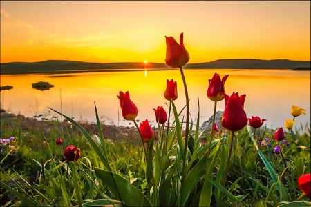 Springtime Sunset - blossoms, flowers, tulips, sky