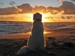 Dog Watching the Sunset