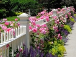 Pink Snapdragons And Ornamental Fence Posts