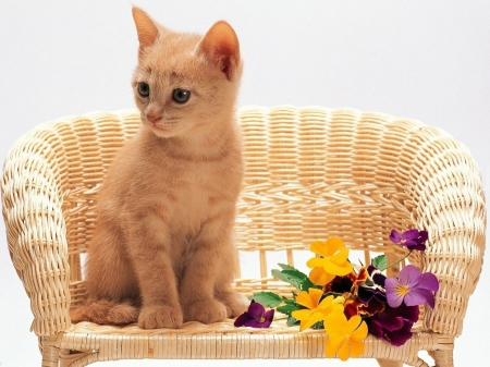 cute cat - cool, cats, animals, cute, photography, flowers