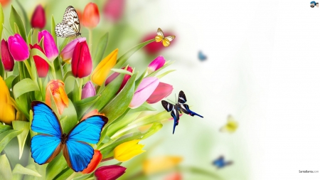 Tulips with butterflies - Tulips, Butterflies, Flowers, Nature, Colourful