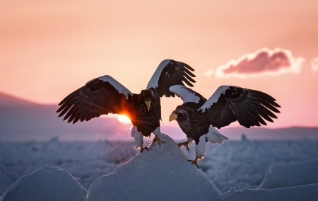 eagle birds - photo, birds, eagle, animals
