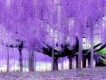 Ashikaga Blumenpark Touchigi Japan