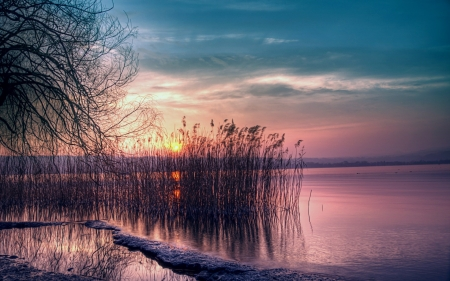 Sunrise - reeds, dawn, water, sky