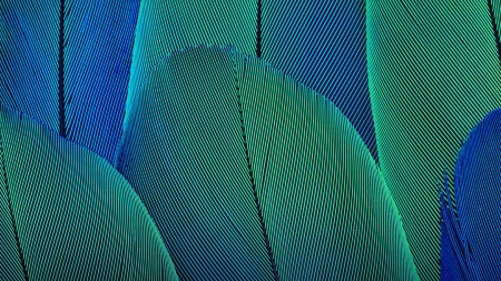 Upward Feathers of green
