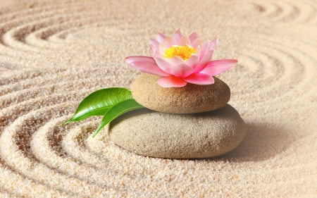 Sand Stone n lily - lily, water, sand, stone, zen