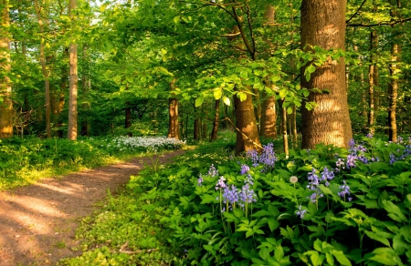 Path in spring forest - forest, wildflowers, greenery, path, beautiful, walk, spring, trees