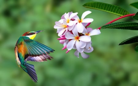 Kingfisher - Flowers, Bird, Wings, Kingfisher