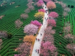 China - Spring colors
