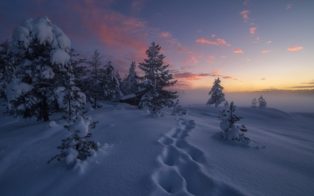 Winter Sunset - sunset, nature, snow, winter, forests
