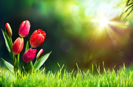 Tulips on grass - rays, grass, sunny, spring, morning, tulips, meadow, glow, beautiful, sunbeam