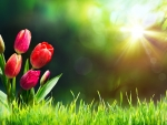Tulips on grass