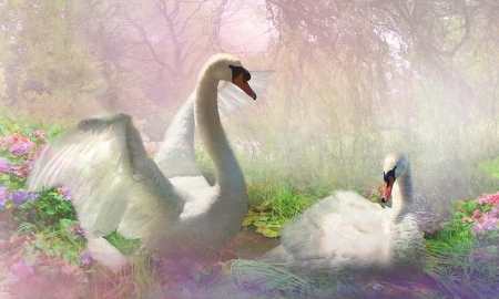 Lovely Swan Painting - Gentleness, Swans, lovely, beauty, painting, nature, pastels, softness, Serenity