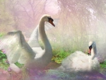Lovely Swan Painting