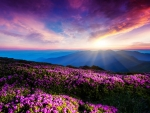 Lovely Sunset Over Flowers