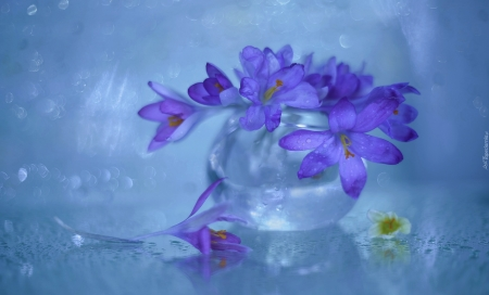 purple flowers - still life, flowers, beauty, photography, purple