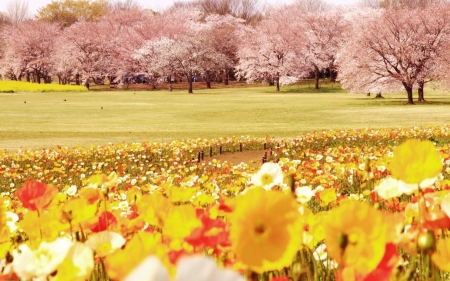 Framed by Nature - field, cherry blossoms trees, grass, birds, flowers, nature, park