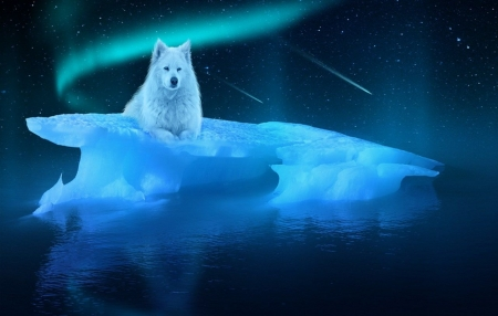 Arctic Wolf - predator, ice, aurora borealis, northern lights, art