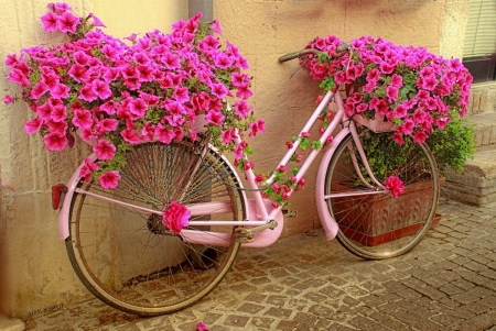 Pink Flower in a Bicycle - bicycle, flowers, pretty, pink