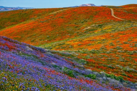 Flower Road - flowers, nature, sky, road, colorful