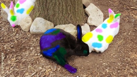 Which Bunny Started the Paint Ball War? :P :D - ho1iday, yellow, rabbie, bunnys, green, purple, rabbits, bunny, violet, bunnies, white, pink, tree trunk, blue