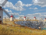 Summer Windmills