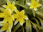 Beautiful yellow spring flowers