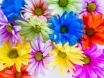 Vibrant Colored Daisies