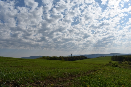 cloudy sky - forest, sun, grass, spring, clouds, sky, country, green, day, land, white, field, blue