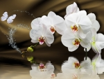 Orchids reflected in water