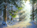 Wintersun in forest
