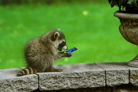 Surprise - funny, green, raccoon, raton, phone, animal